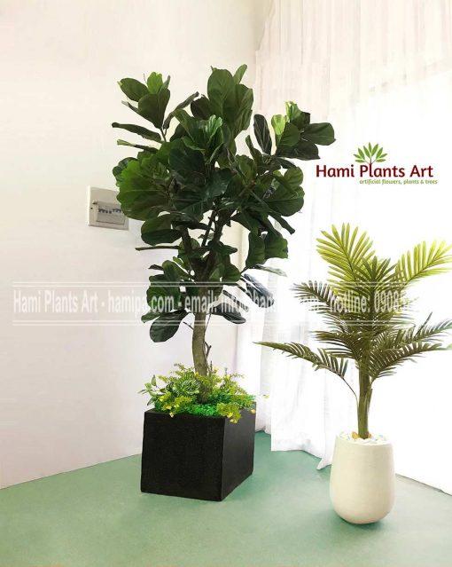 cây bàng singapore giả